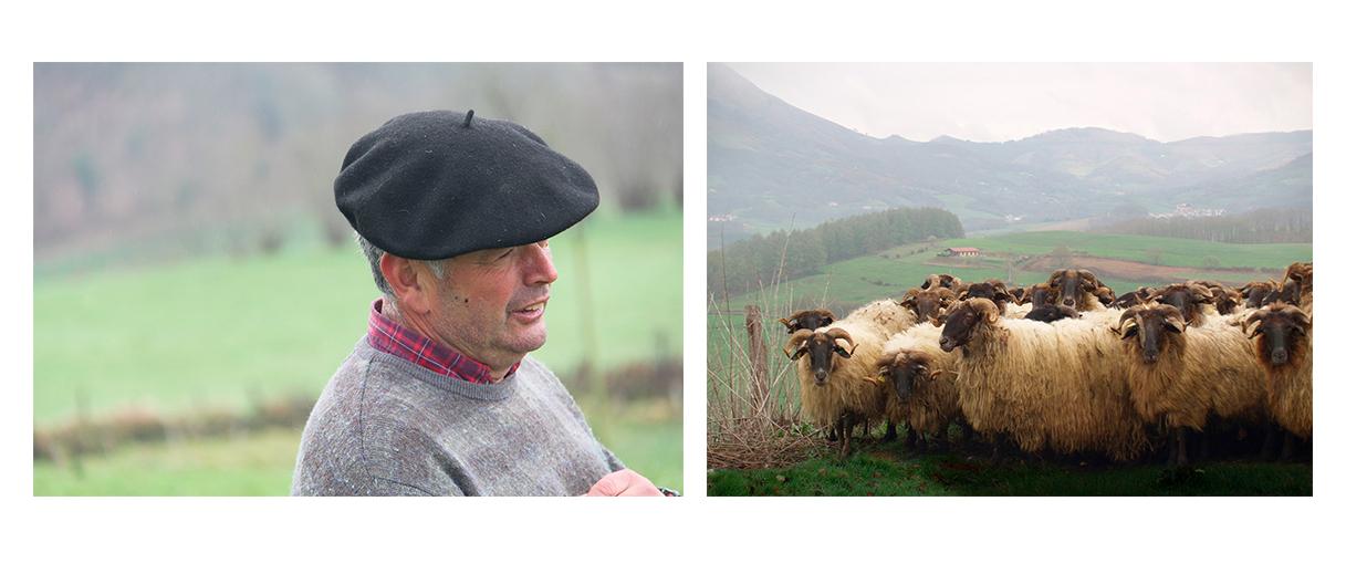 Ovejas Latxas y pastor en el valle de Baztán.